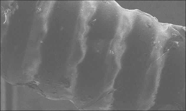 Elixir Nanoweb Beschichtung